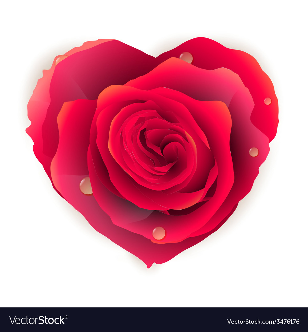 Isolated beautiful red rose heart eps 10 vector image - Pics of roses and hearts ...