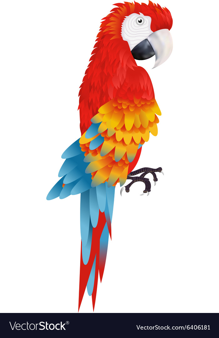 A bright macaw parrot isolated on white background