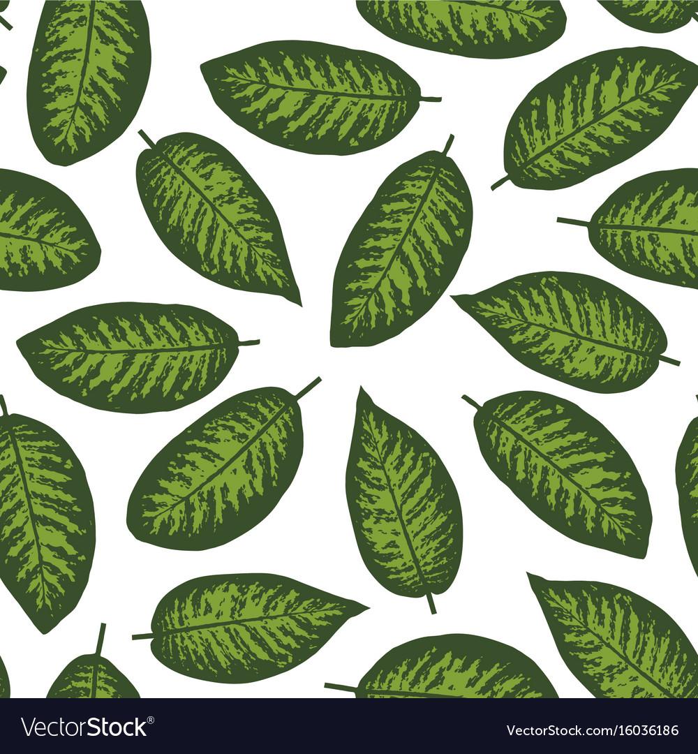 Dieffenbachia tropical leaf seamless pattern vector image
