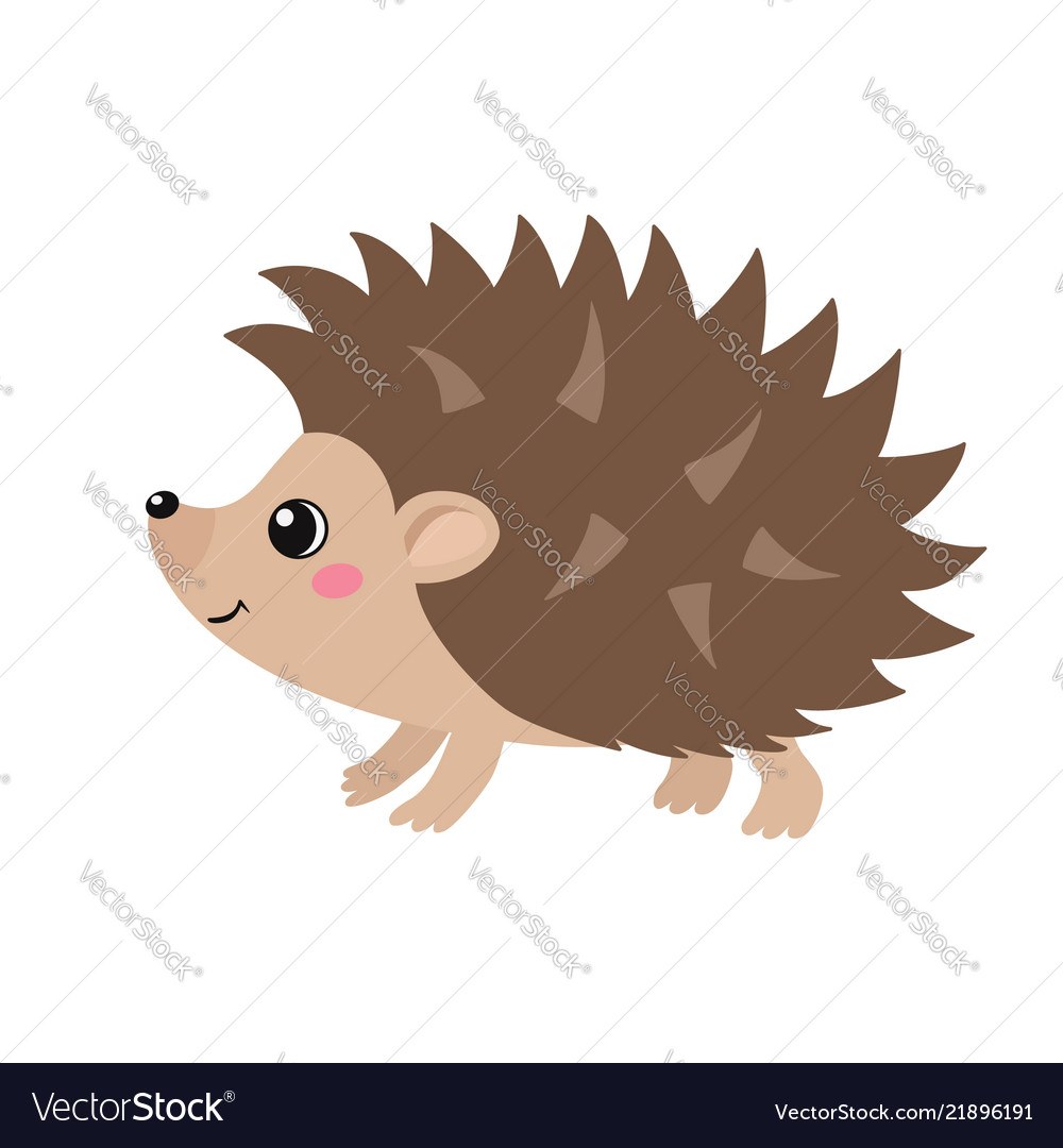 Cute hedgehog isolated on white background