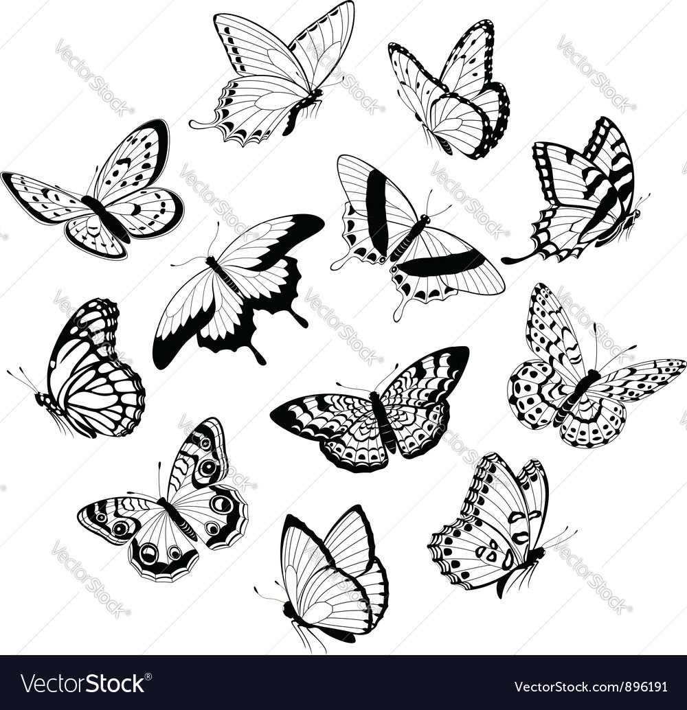 Flying black white butterflies