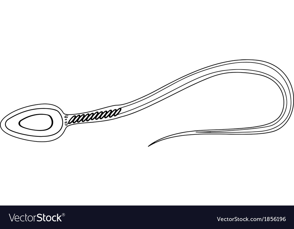 Sperm cell vector image