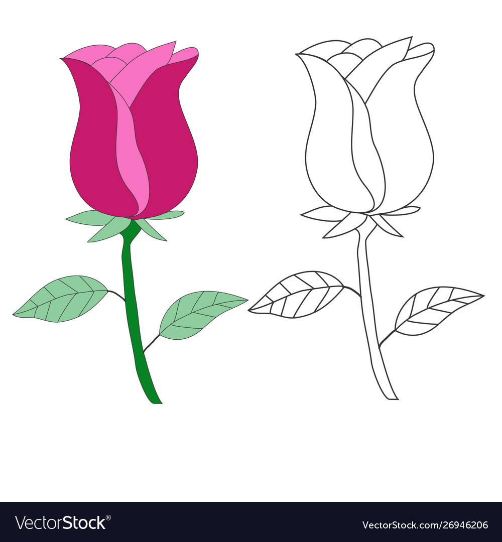 Hand drawing rose flower isolated on white eps 10