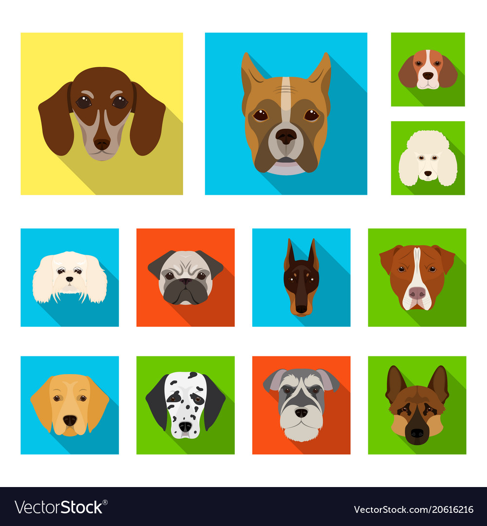 Dog breeds flat icons in set collection for design