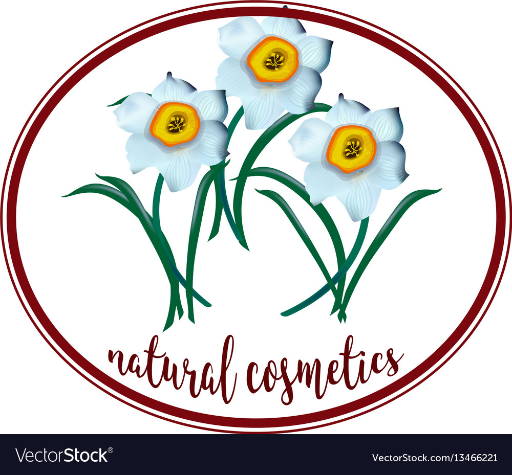 Spring flower narcissus for cosmetics logo vector image