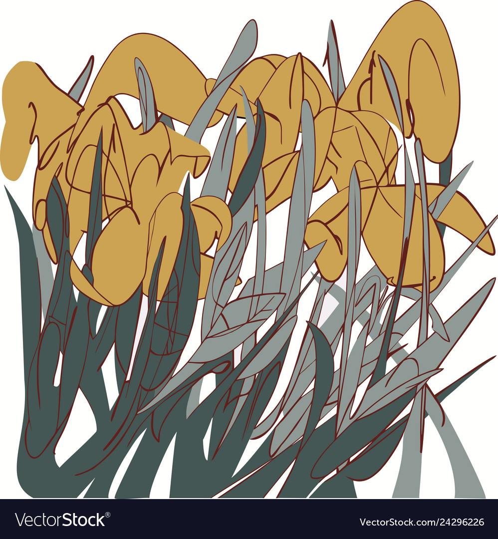 Yellow irises in the grass abstract