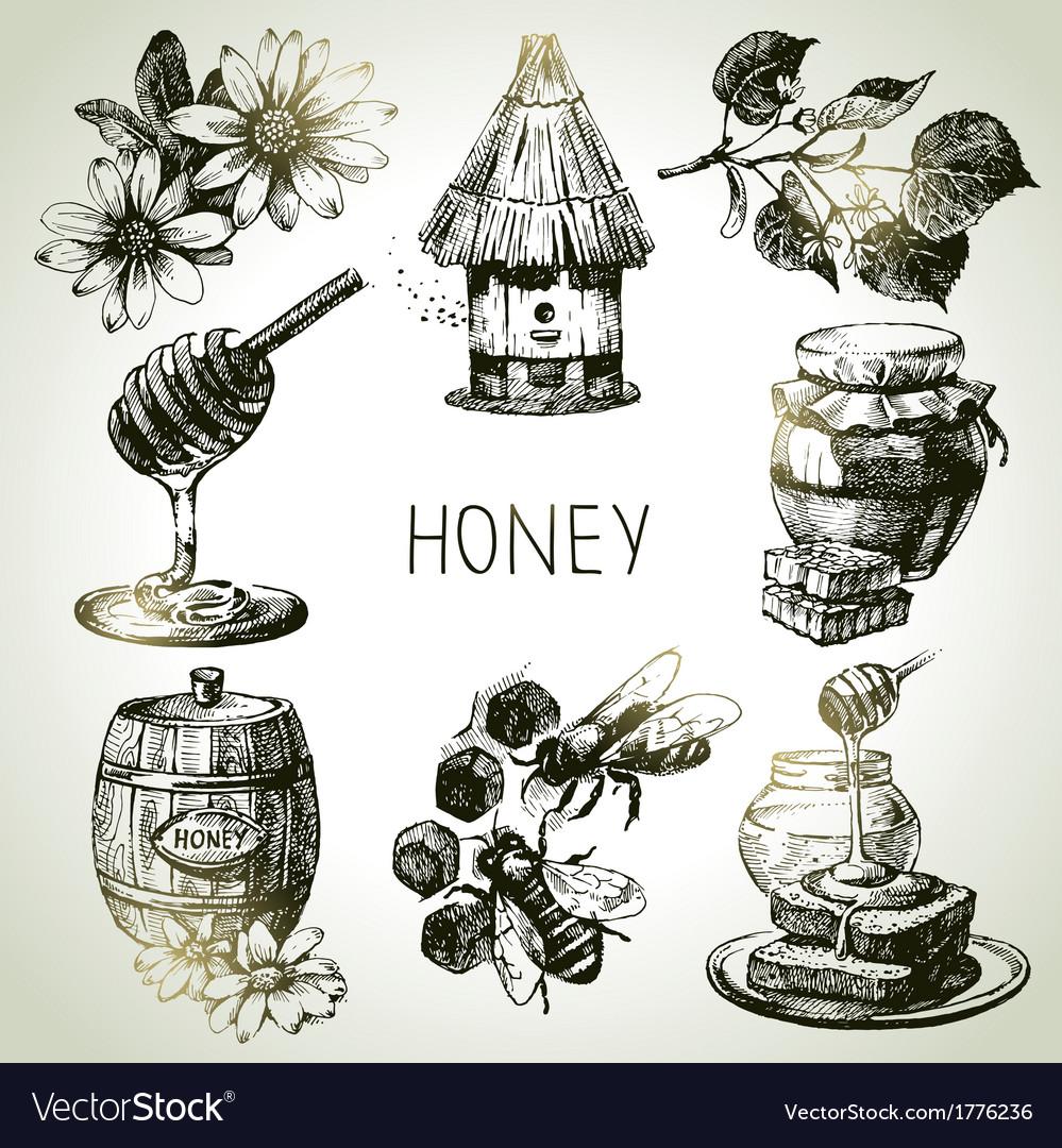 Hand drawn vintage honey set vector image