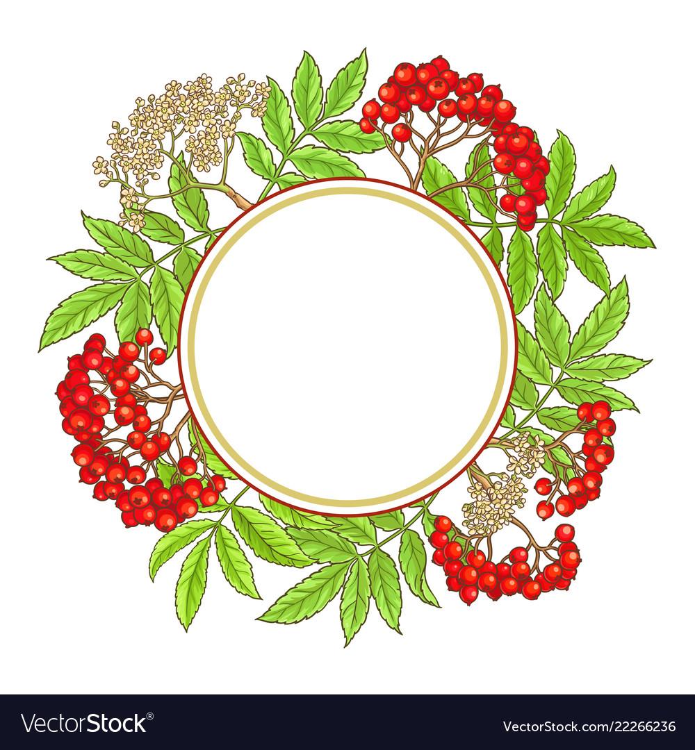 Rowan branch frame