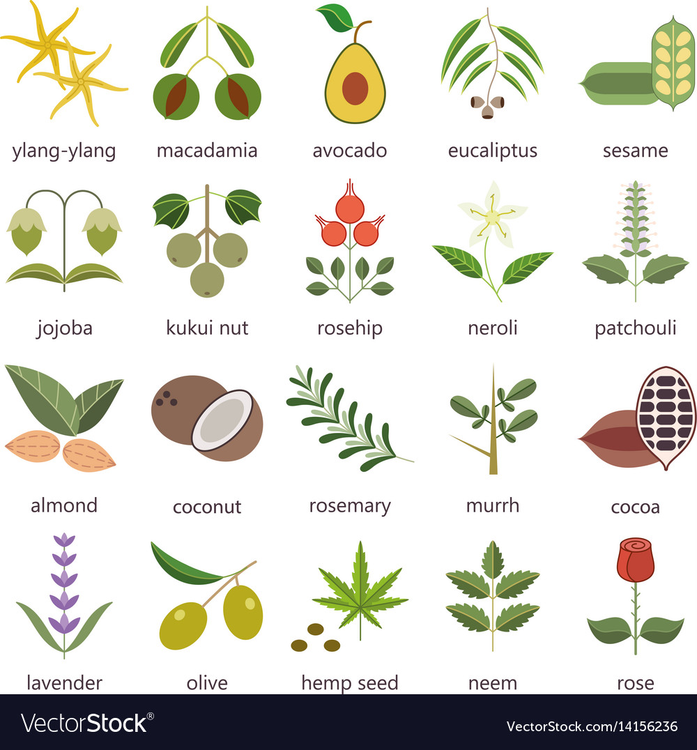Image result for herbs and plants