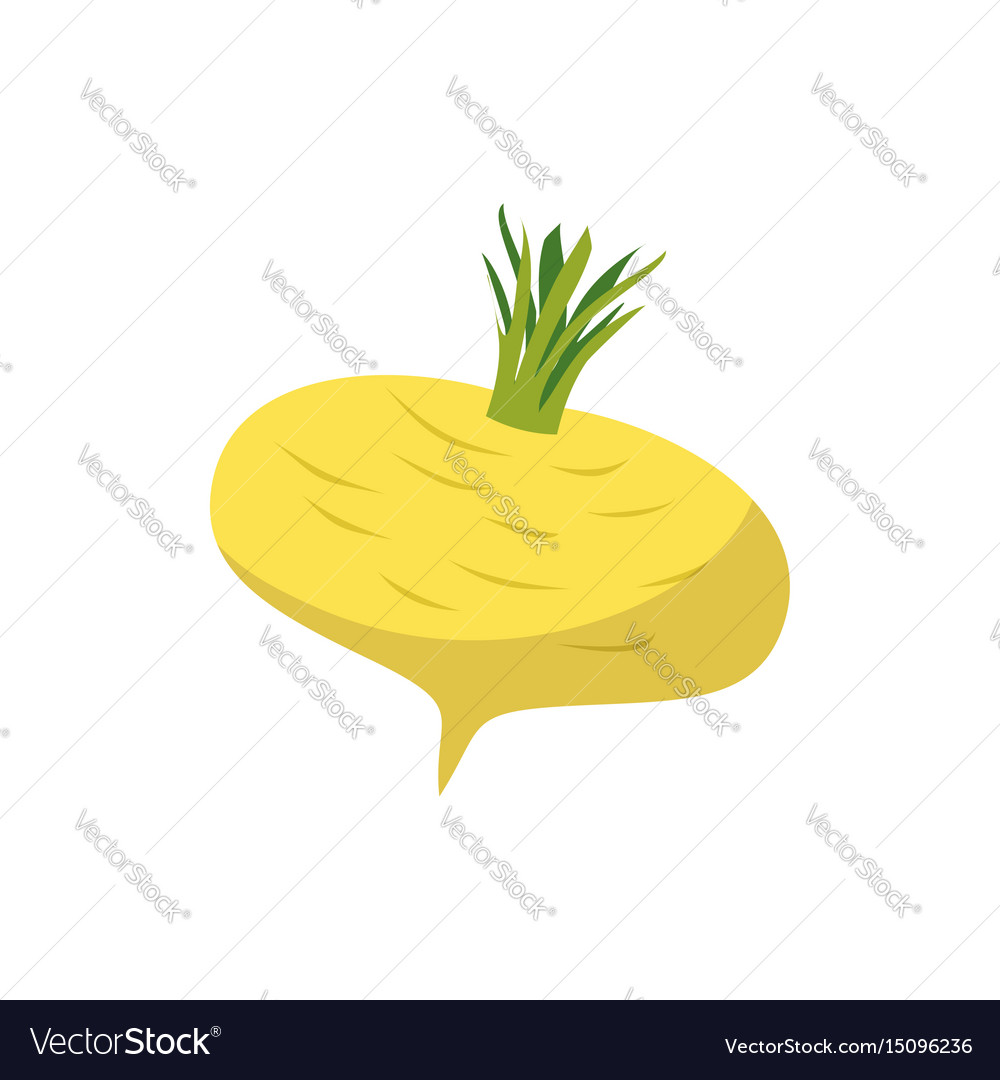 Turnip isolated yellow vegetables on white
