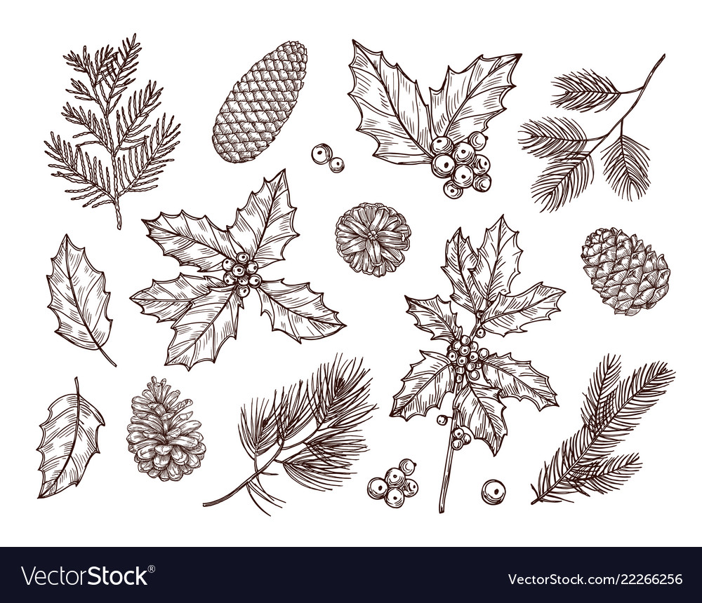 Christmas plants sketch fir branches pine cones