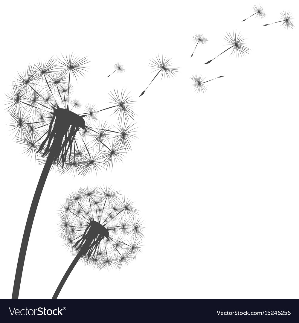 silhouette of a dandelion royalty free vector image