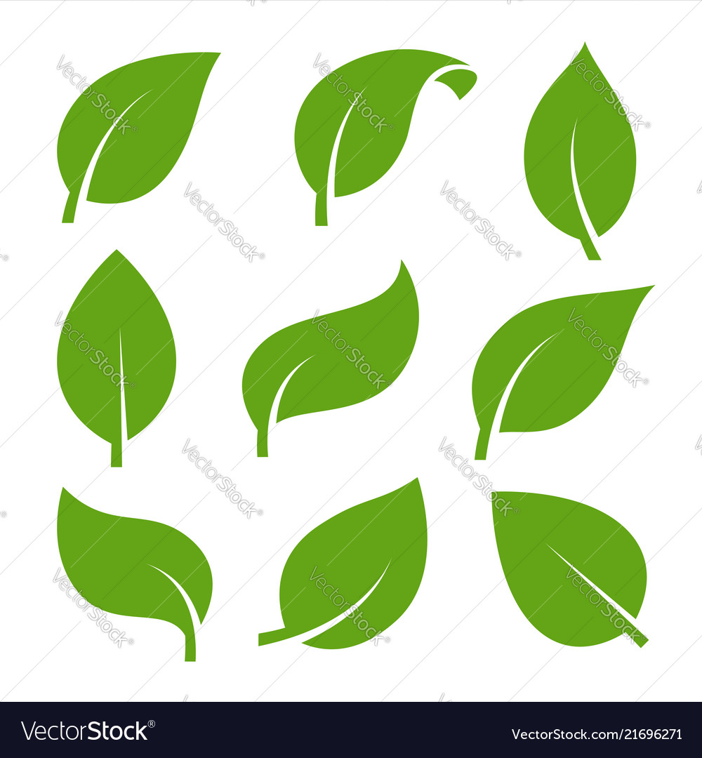 Eco green color leaf logo flat icon set isolated