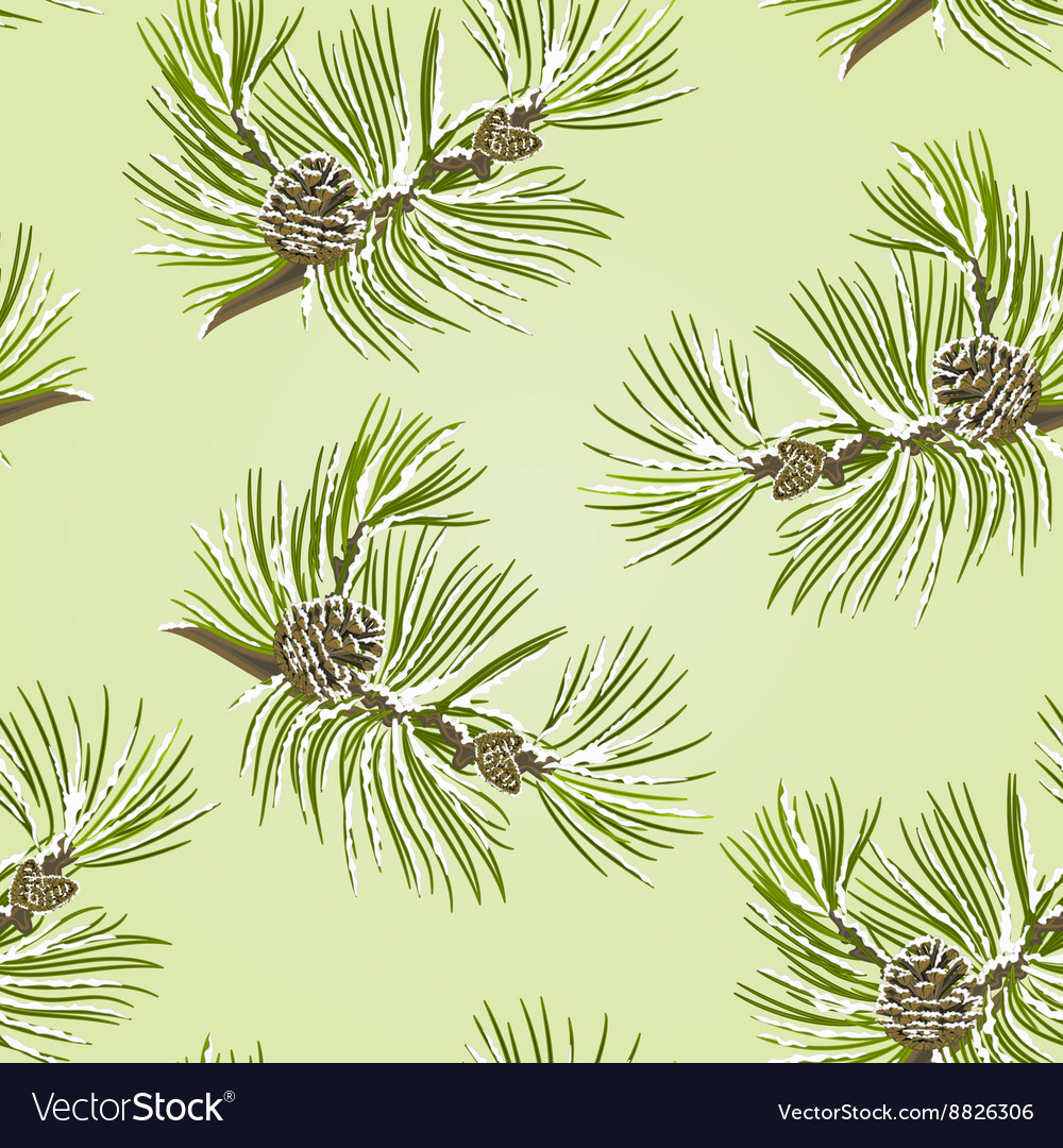 Seamless texture branch Pine tree with pine cones