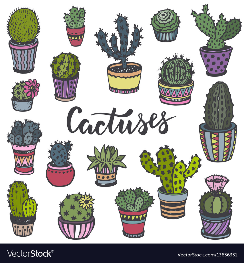 Collection hand drawn cactuses in sketch style