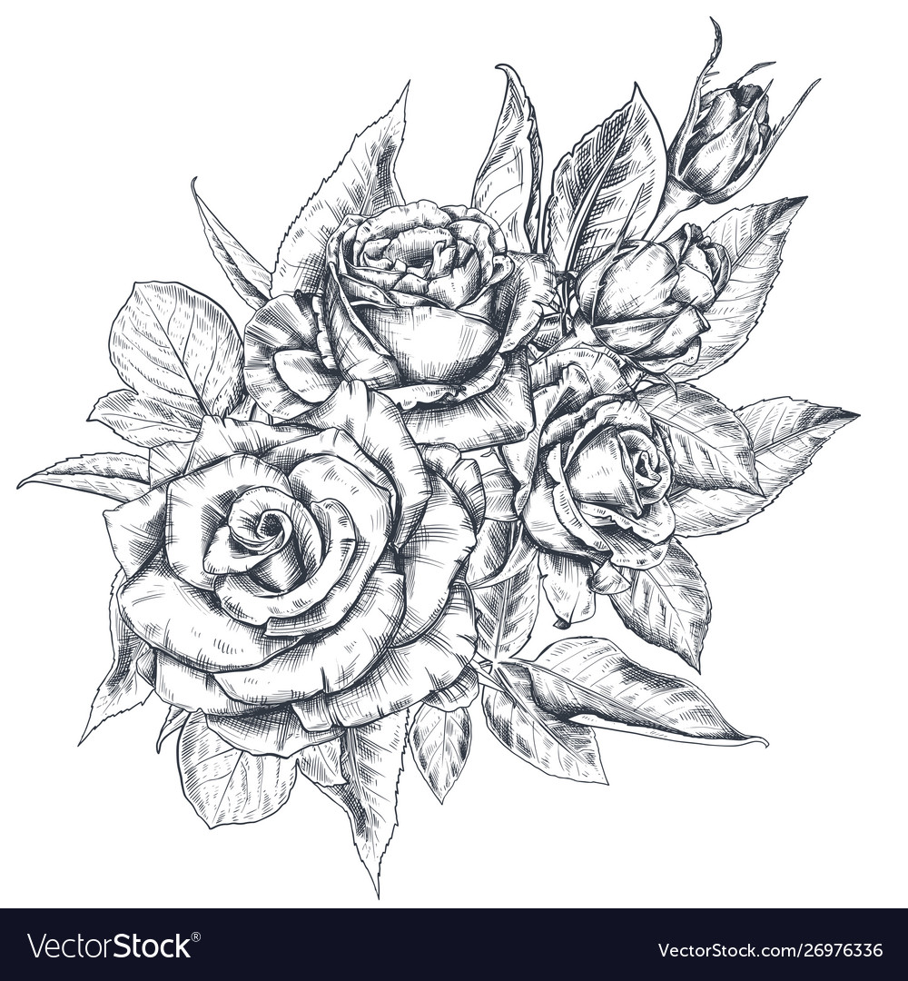 Hand drawn rose flowers bouquet isolated on white