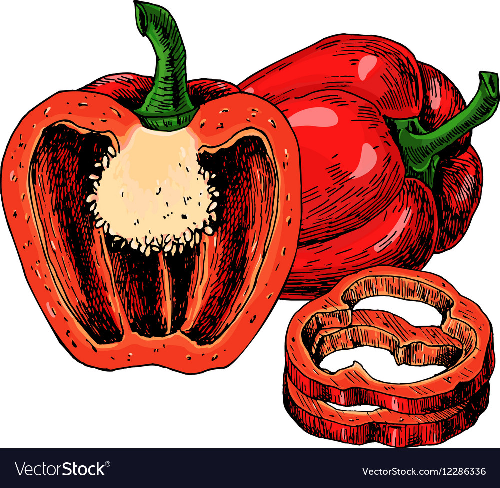 Red bell Pepper hand drawn