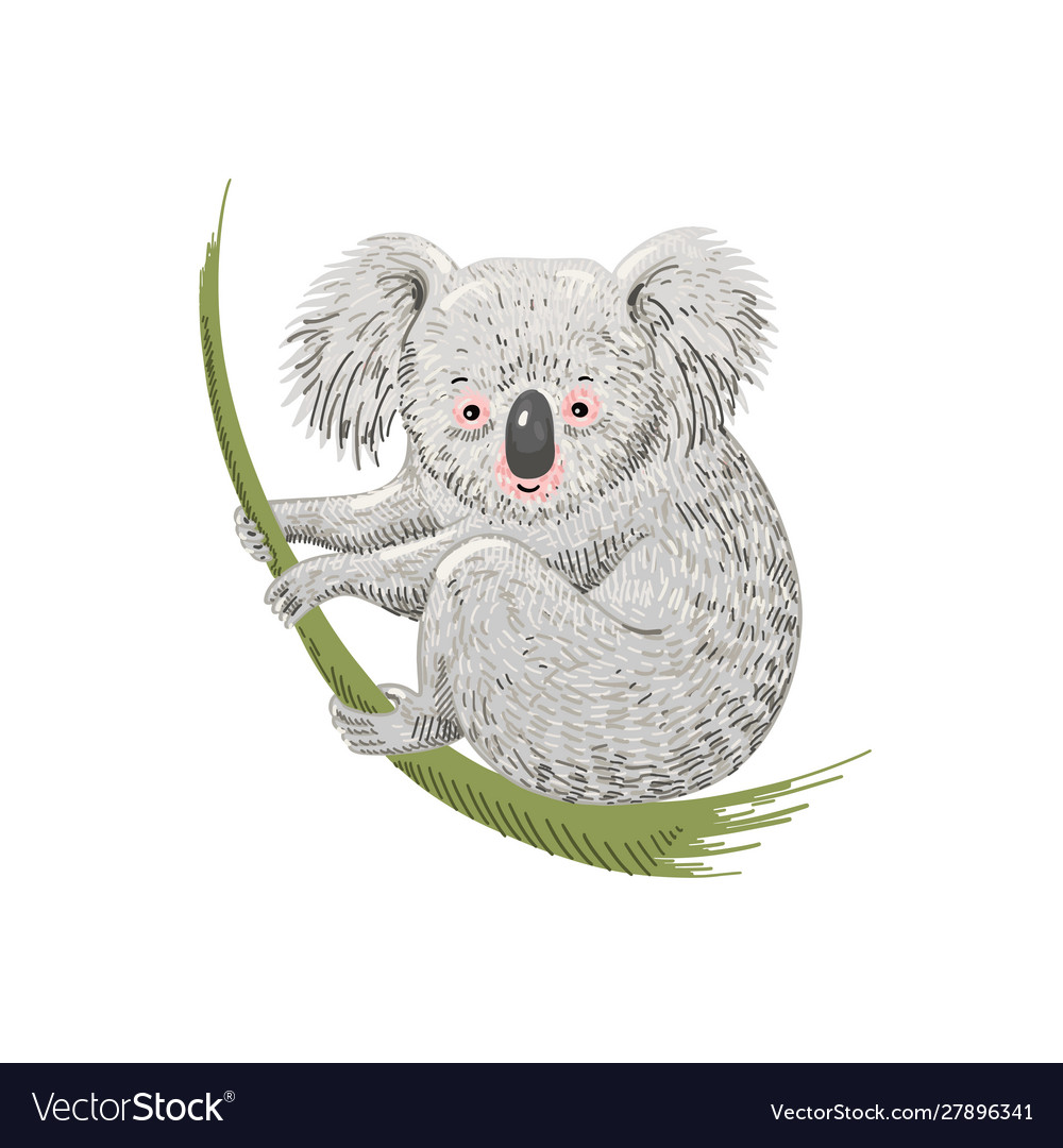 Cute cartoon character koala bear sitting on vector
