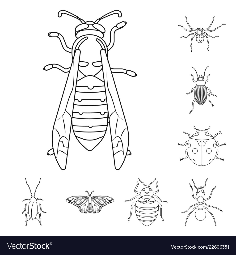 Insect and fly icon set of