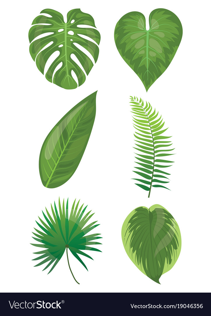 Set of leaves of tropical plants collection of