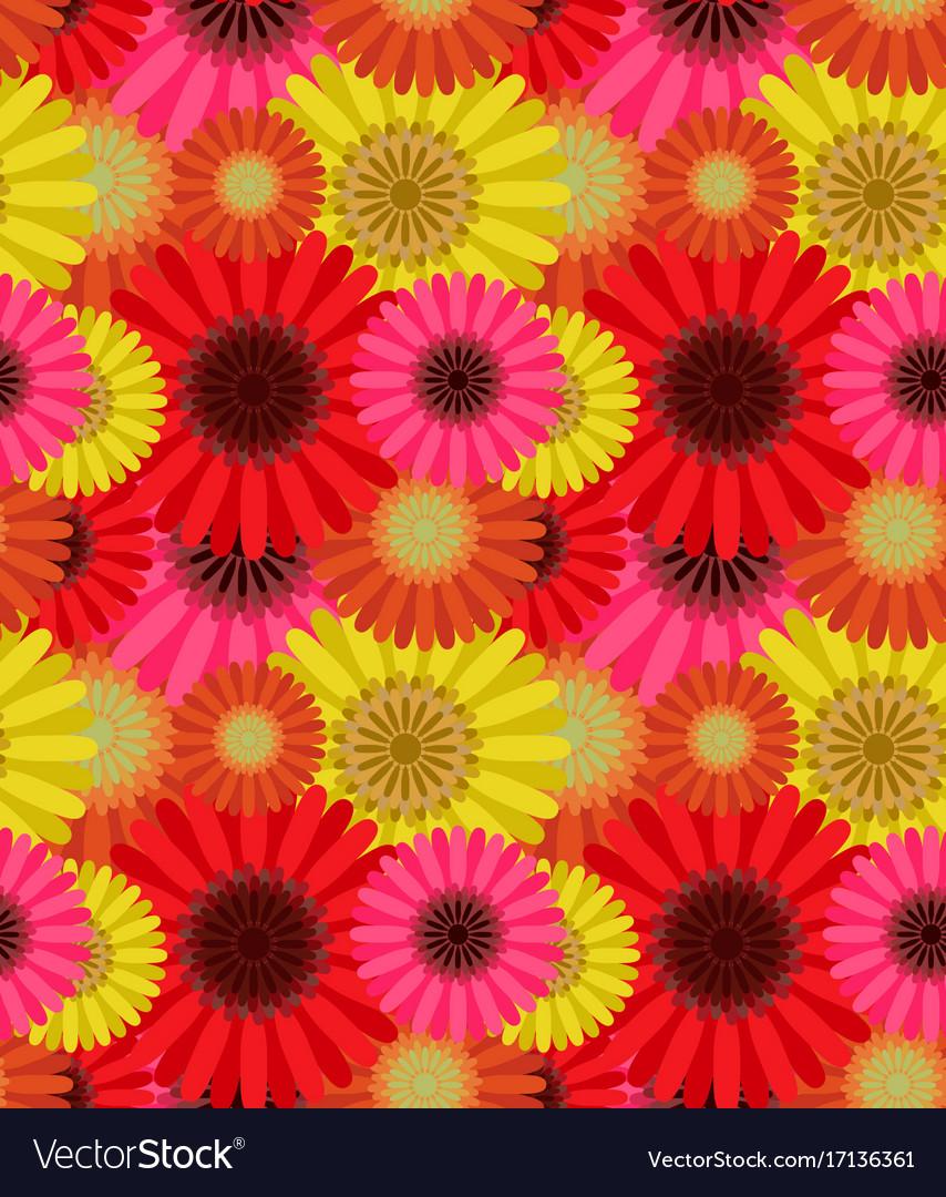 Seamless pattern colorful gerbera flowers