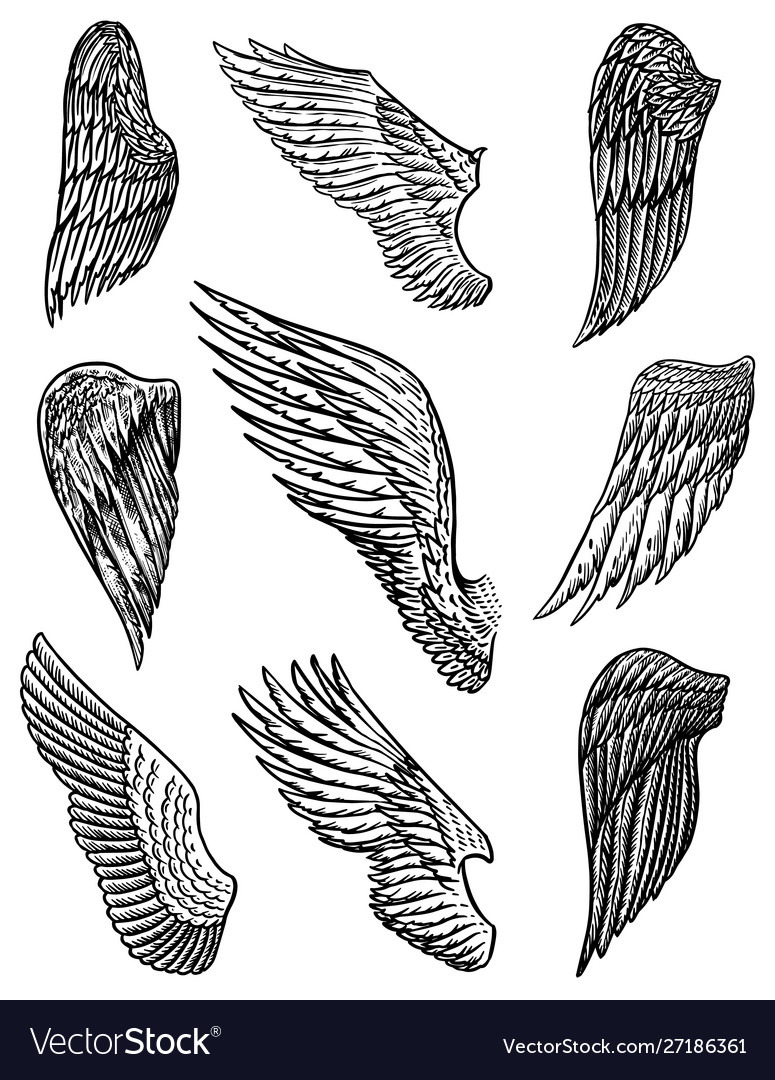 Set angel wings in vintage style template for