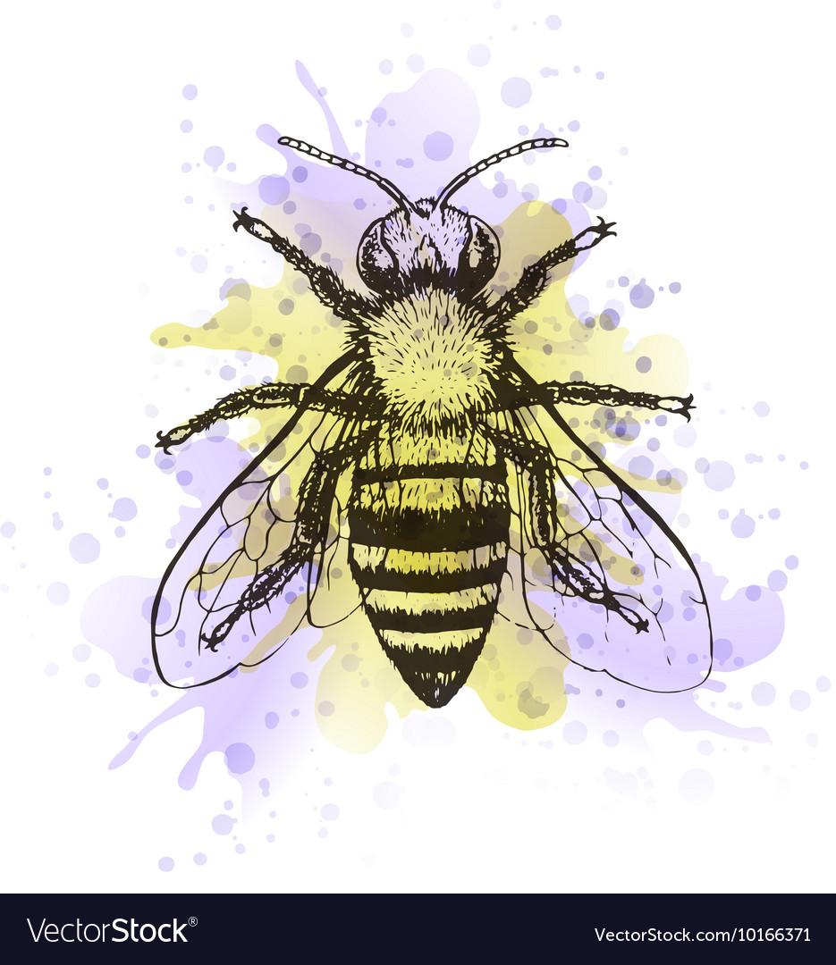 Bee vintage watercolor image