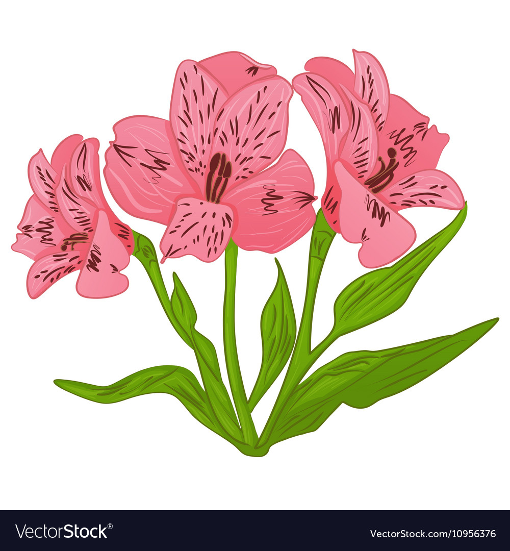 Alstroemeria cartoon pink flower and green leaves vector image izmirmasajfo