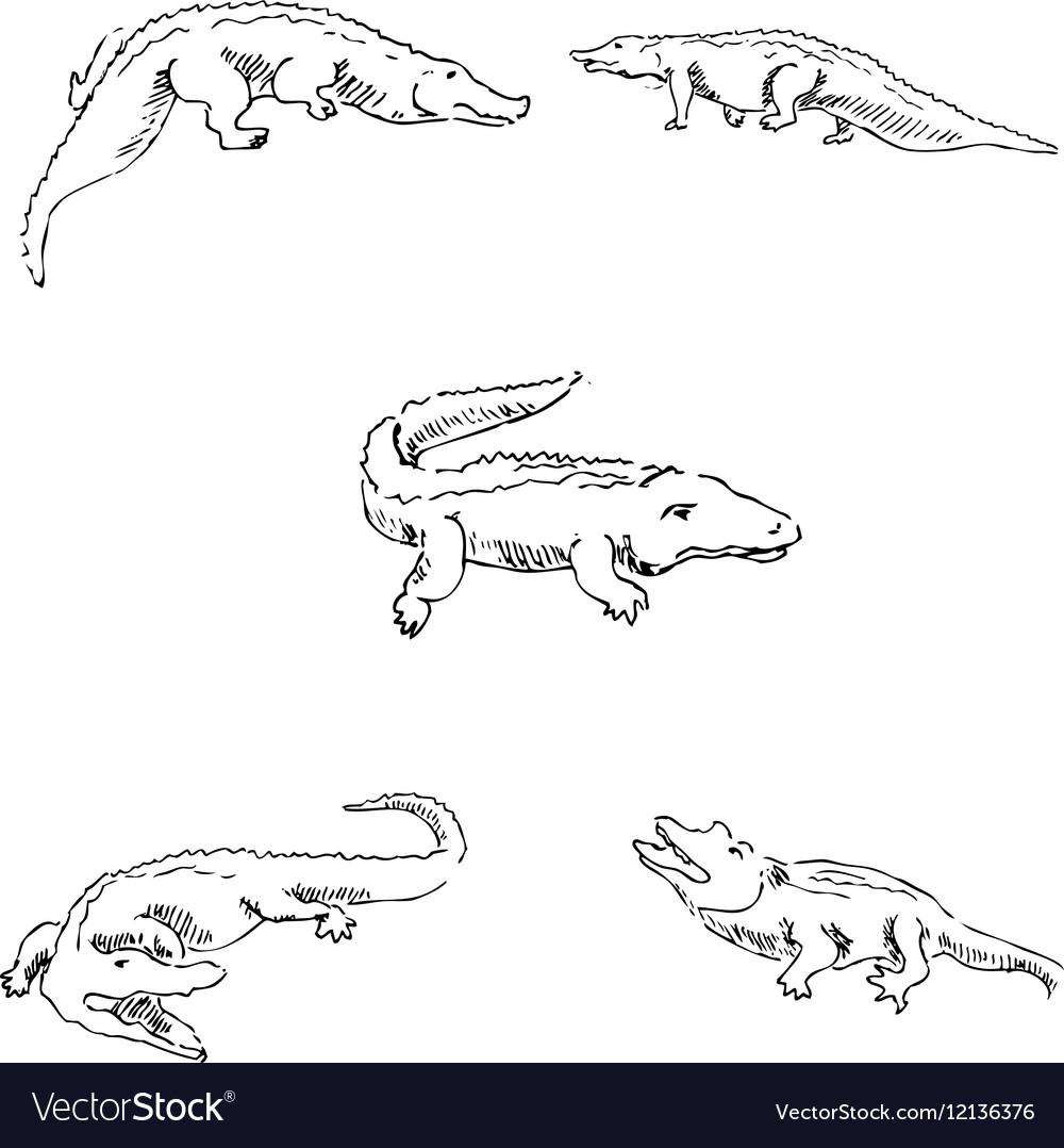 Crocodiles Sketch pencil Drawing by hand