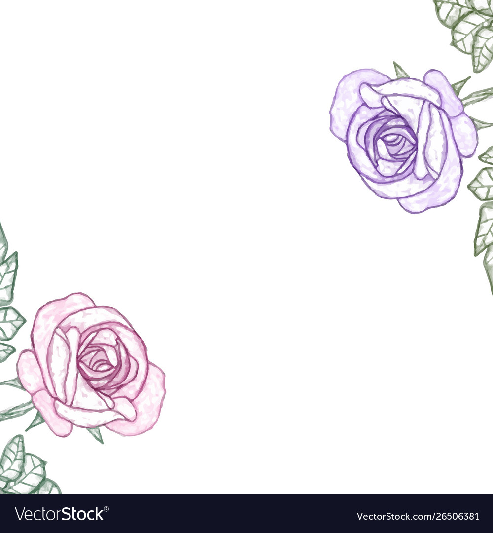 White background with watercolor rose