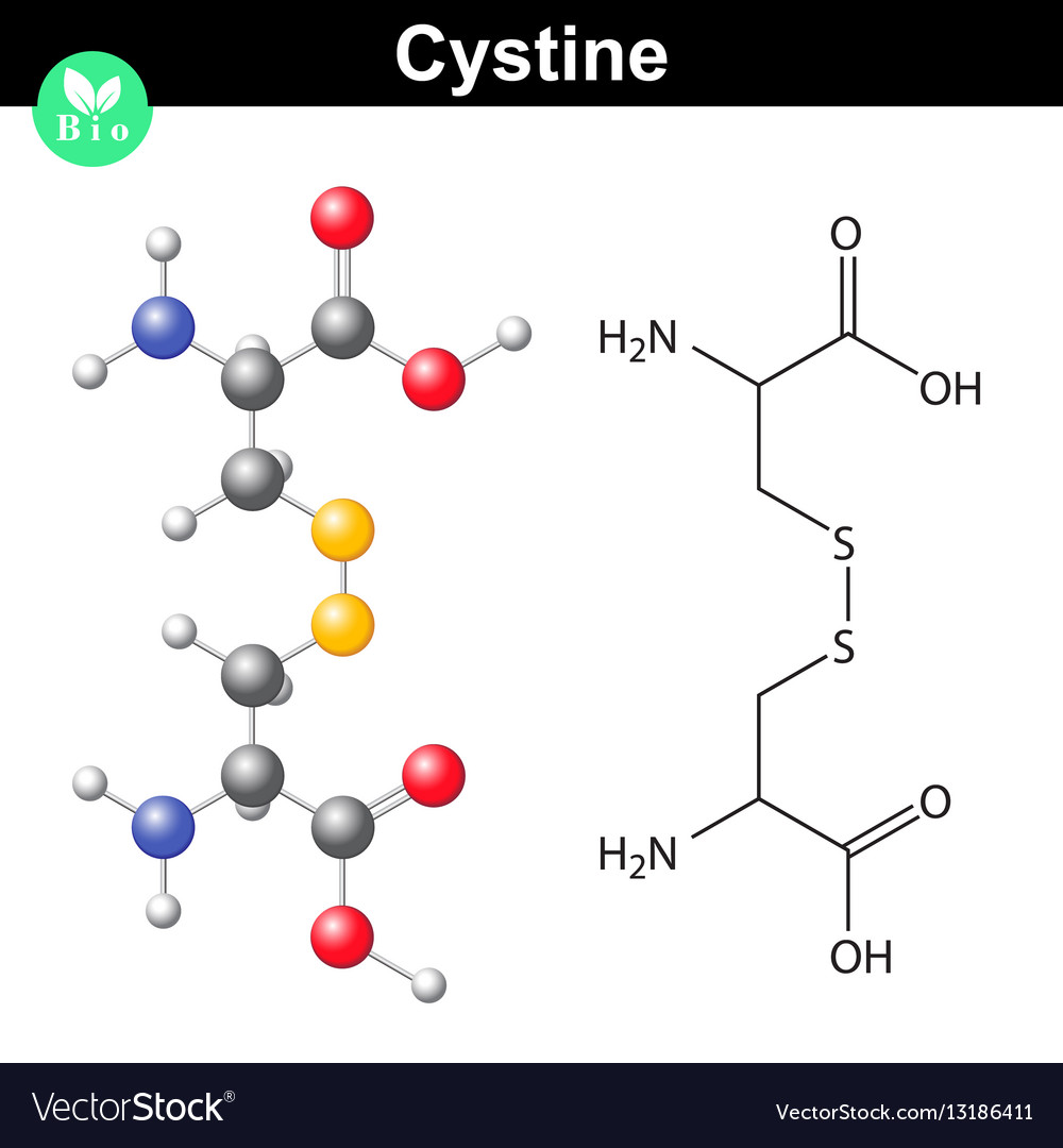 cystine dipeptide molecular structure cysteine vector image