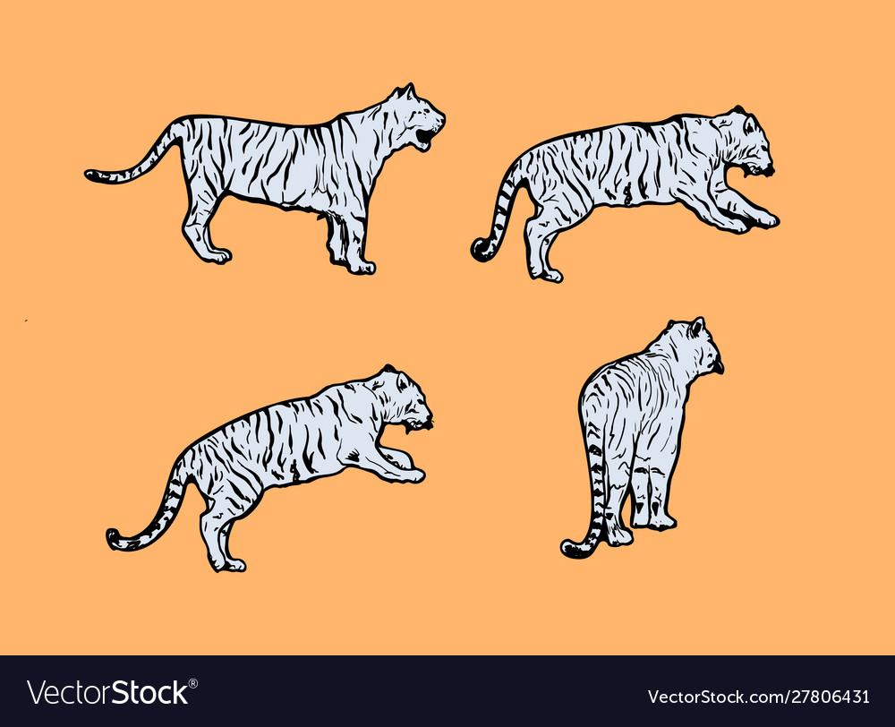 Tigers wild cat set light blue safari