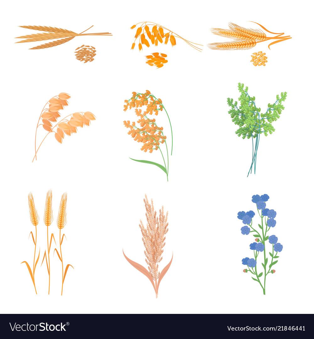 Agriculture farm with healthy tasty organic food