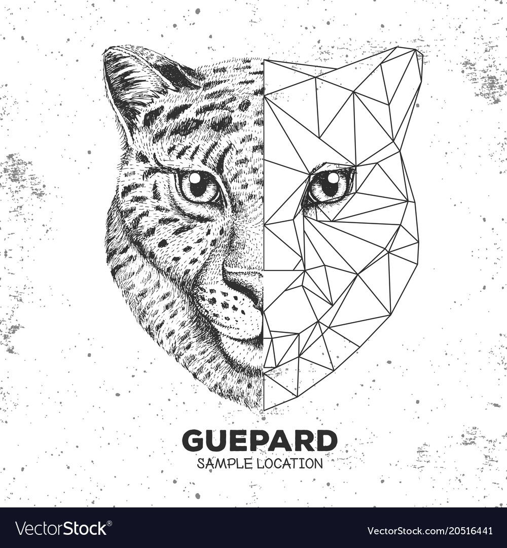 Hipster Animal Realistic And Polygonal Cheetah Vector Image