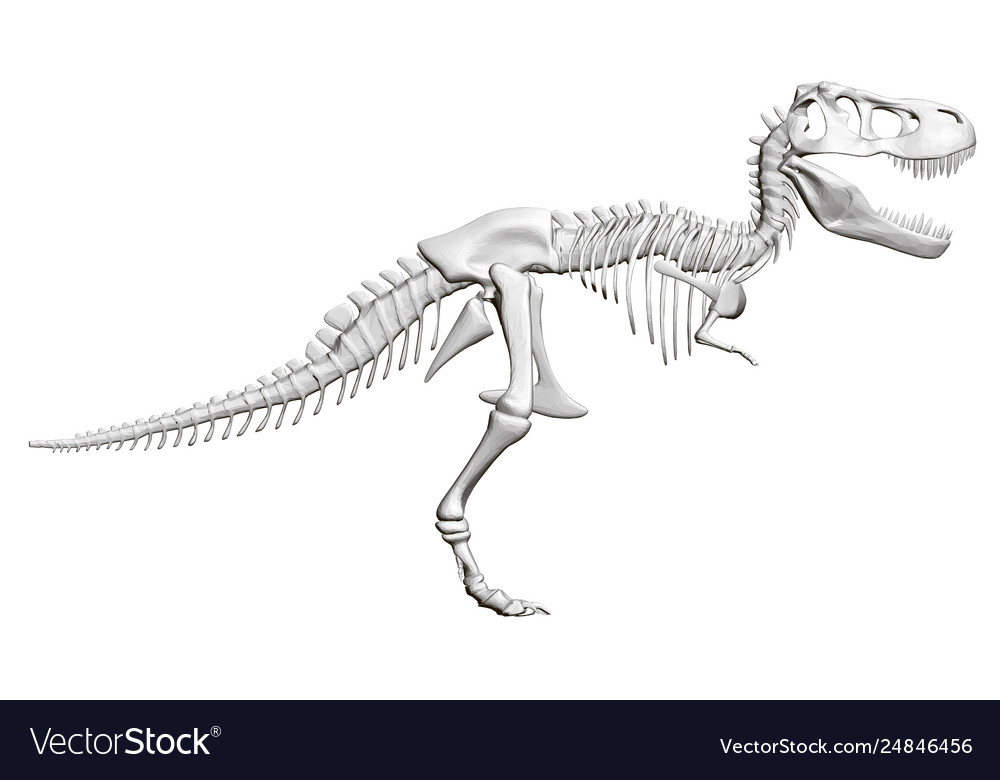 Dinosaur Skeleton Side View 3d Royalty Free Vector Image