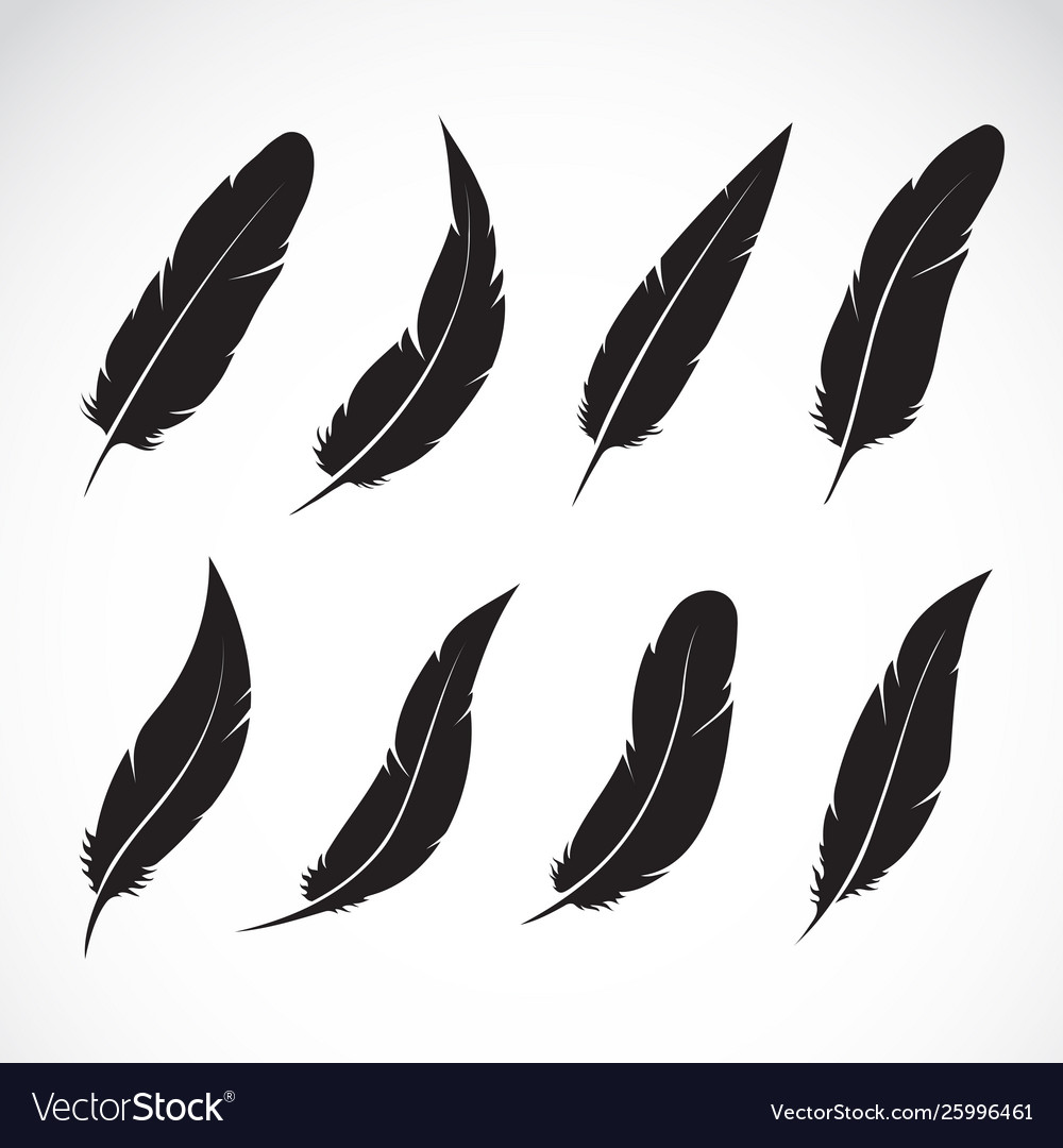 Group black feather on white background easy