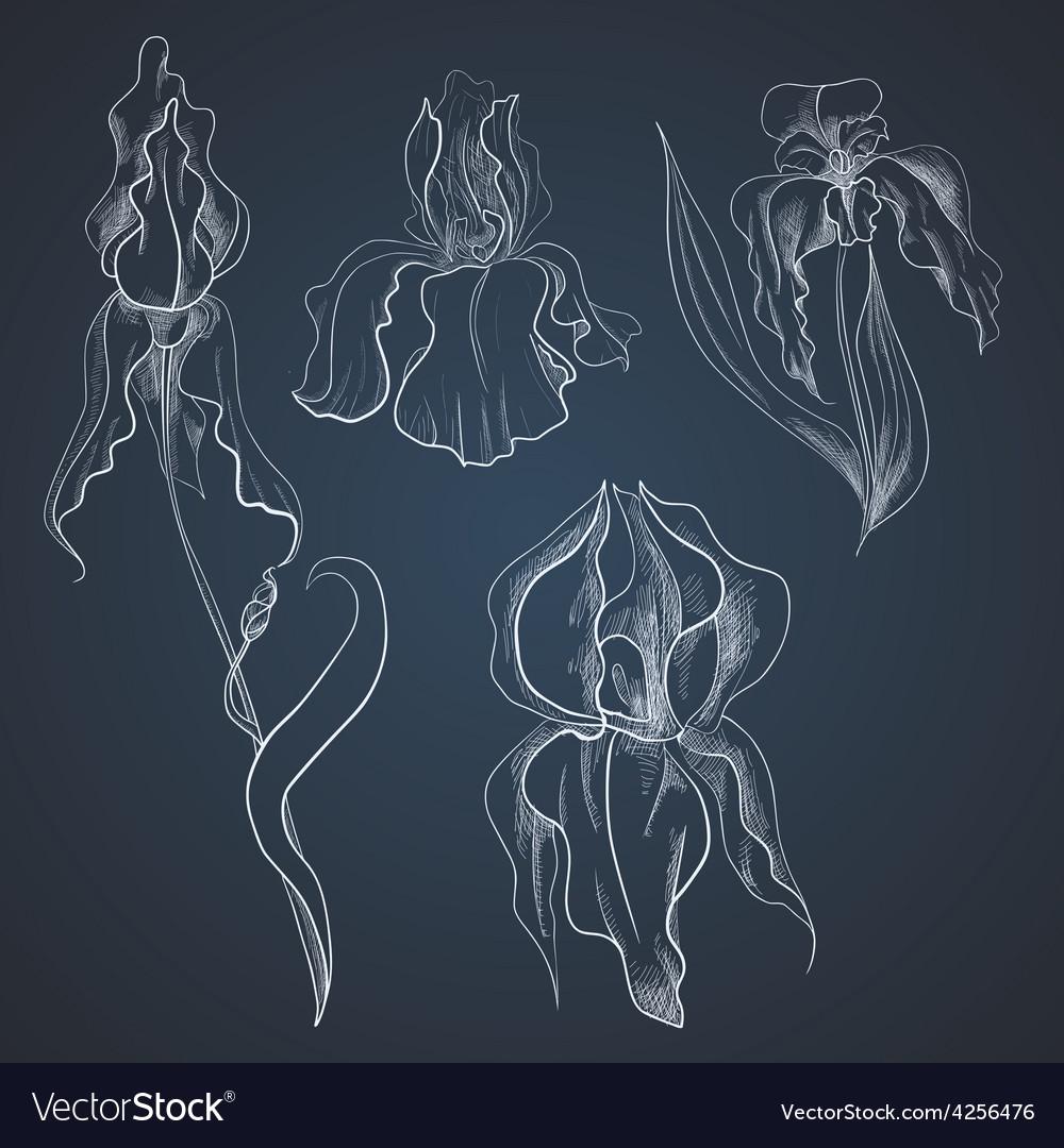 Irises on graphic style vector image