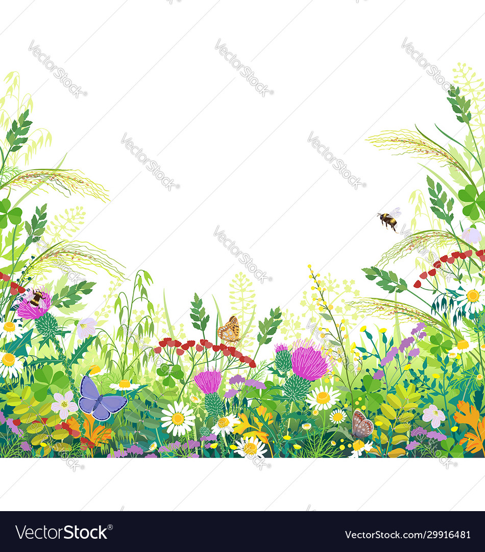 Colorful frame with summer meadow plants and