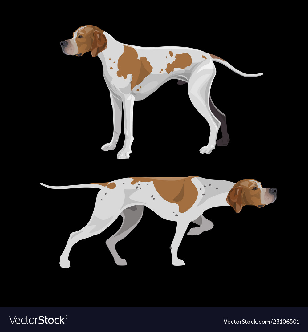Dogs Royalty Free Vector Image