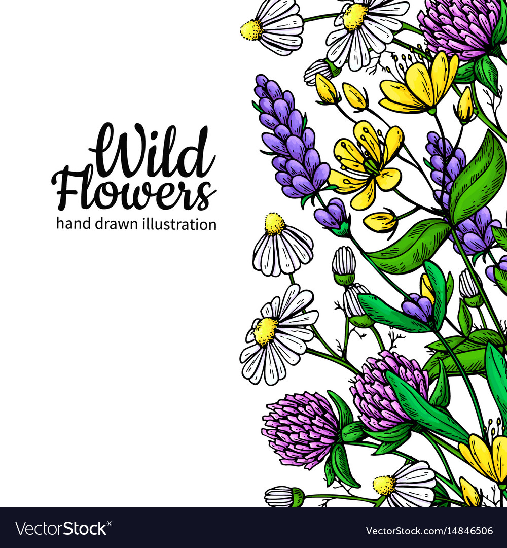 Wild flowers drawing set isolated meadow
