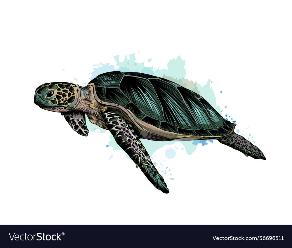 Sea turtle from a splash watercolor colored