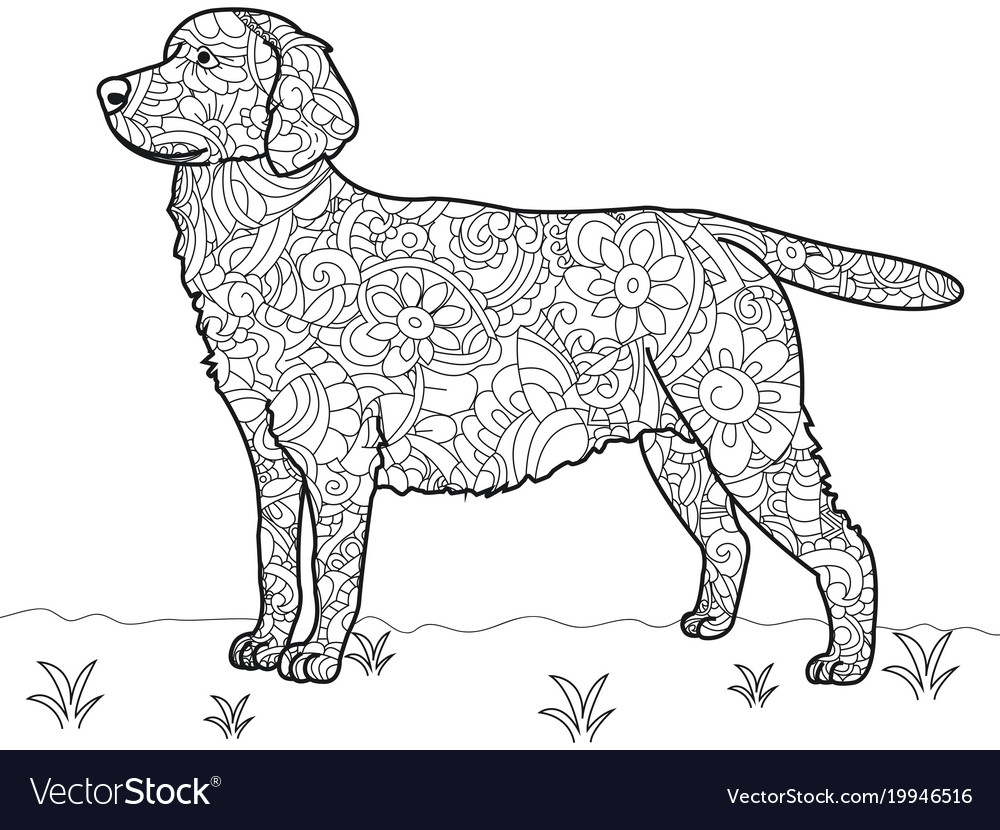 Dog Labrador Antistress Coloring Book Vector Image