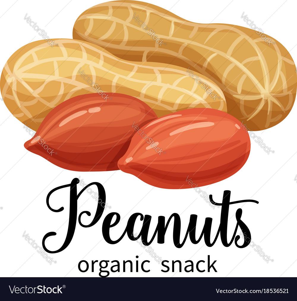 Peanuts in cartoon style