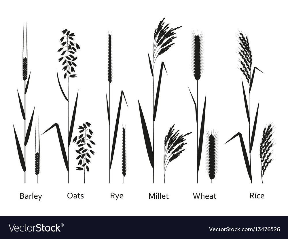 Cereals plants set