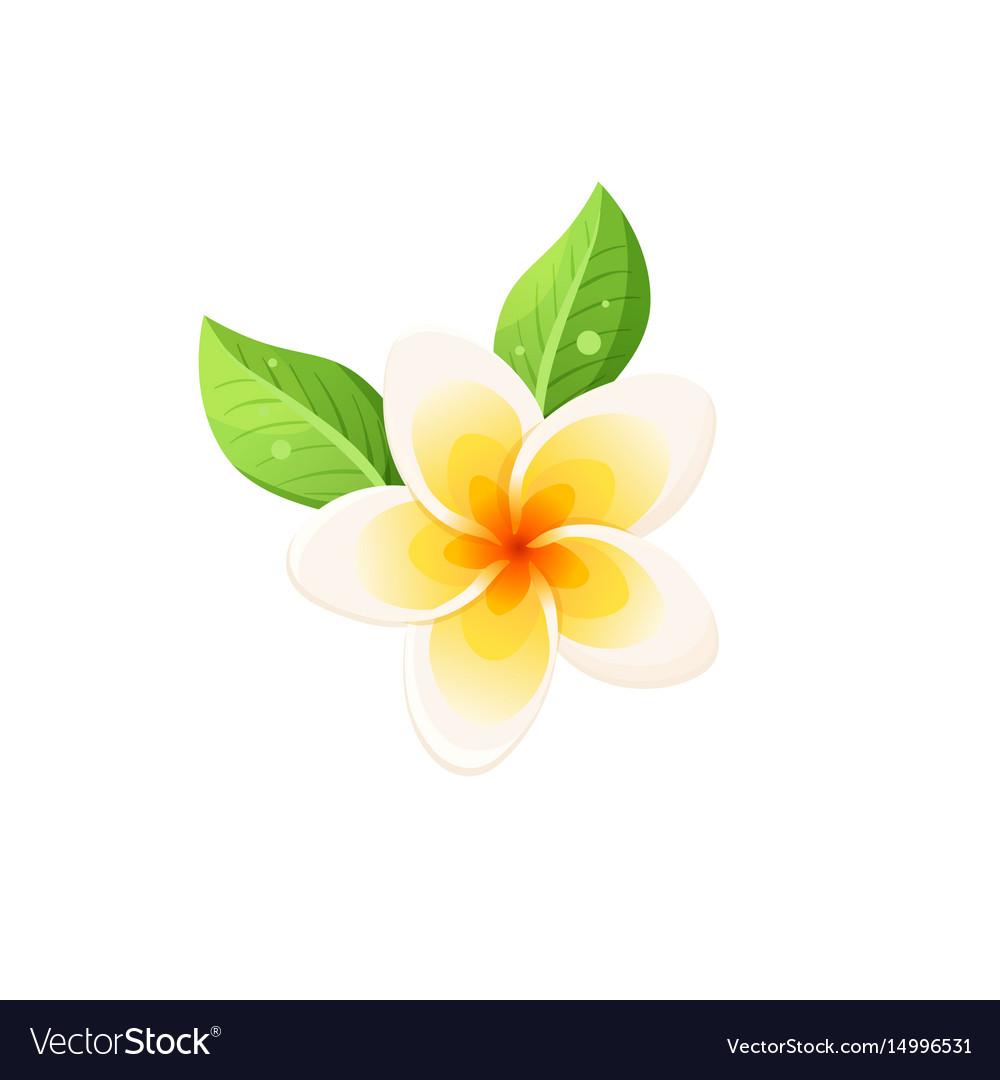 Frangipani icon vector image