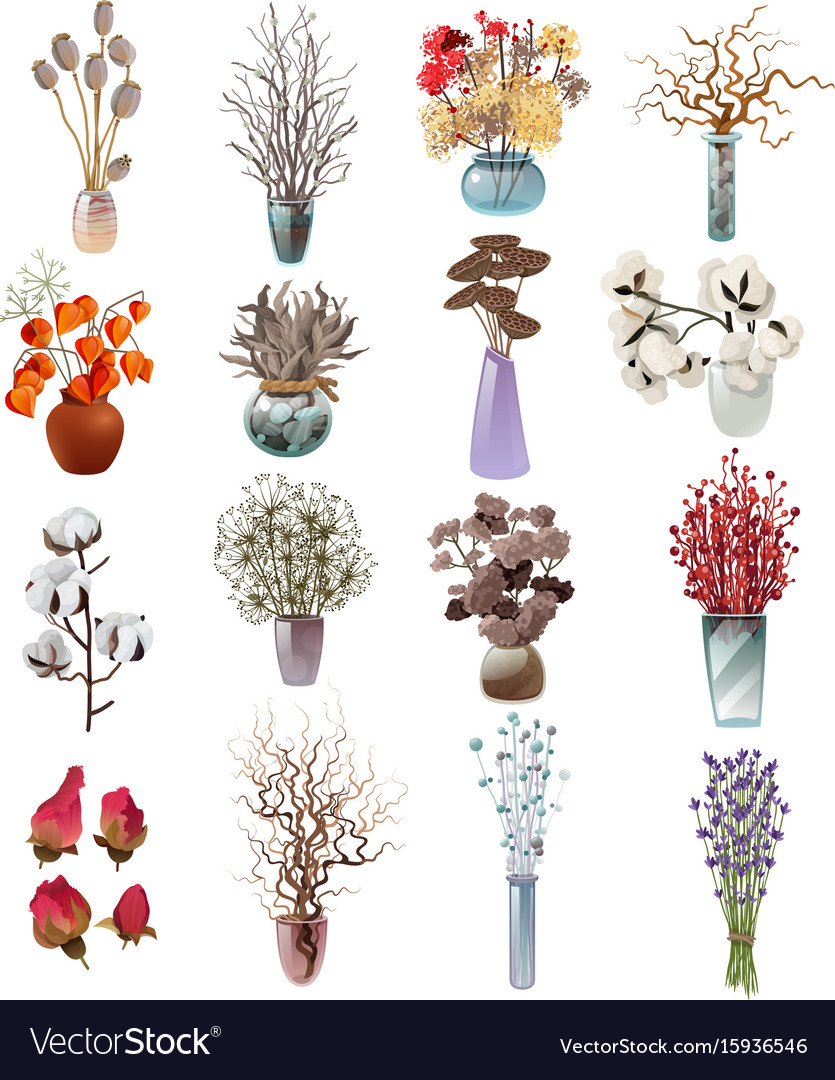 Collection of dry flowers bouquets in vases