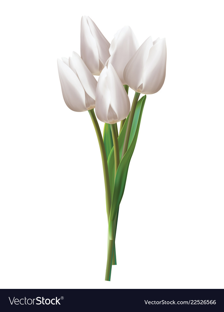 Bouquet Of White Tulips On A Realistic