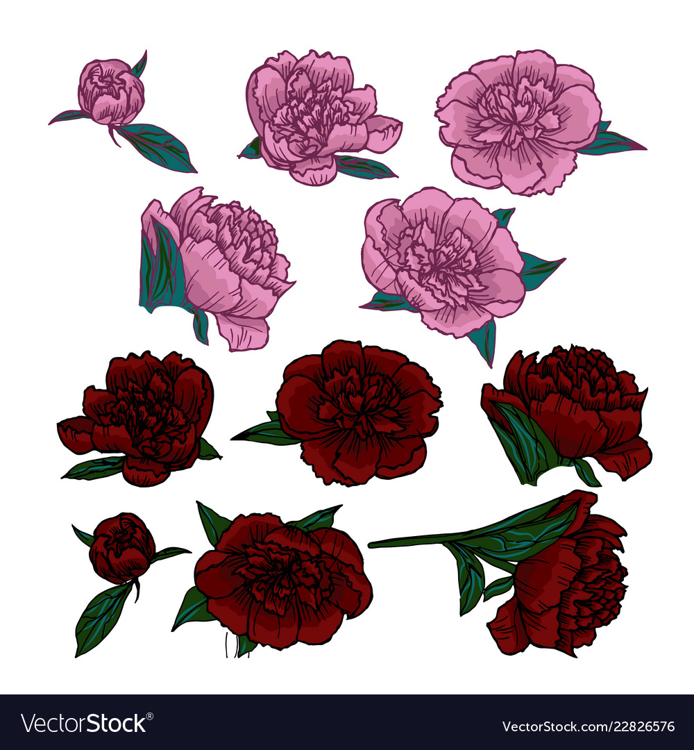 Pink and red peonies heads