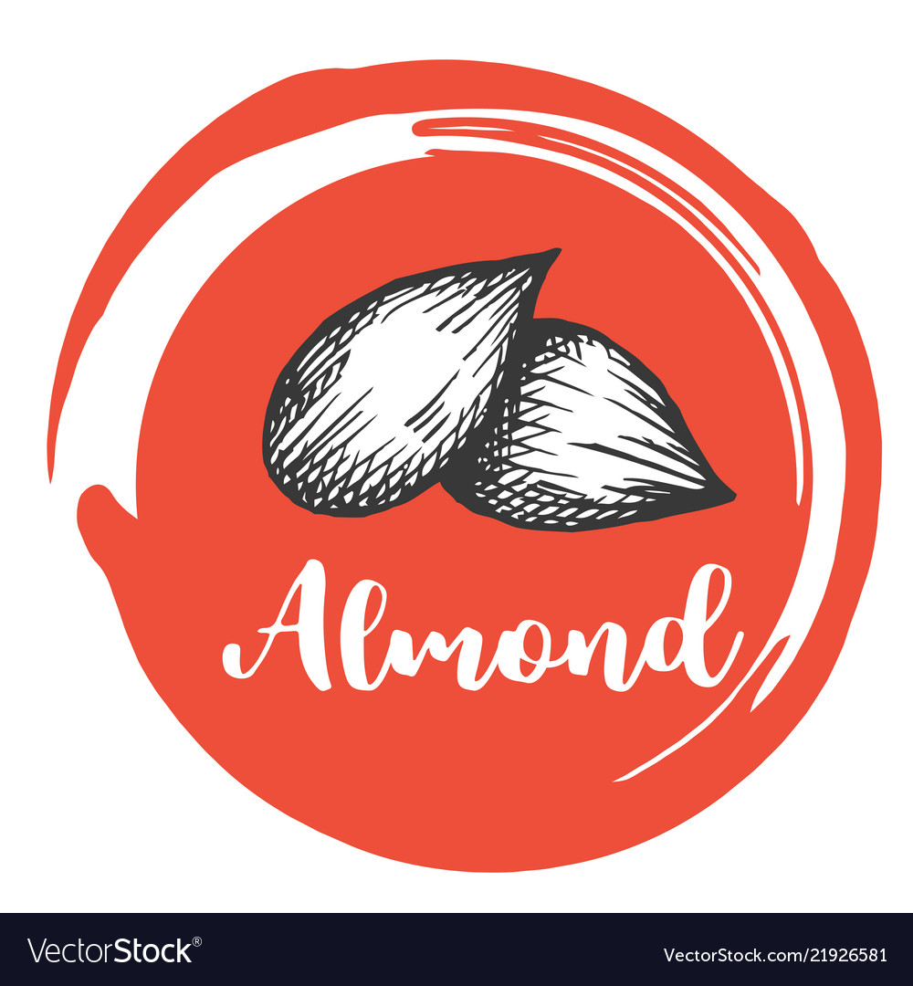 Aldmont nuts vintage hand drawing of almonds