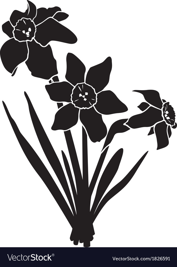 Narcissus silhouette